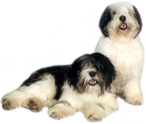POLISH LOWLAND SHEEPDOG breeder, puppies PON, PONs></font></td>   </tr>   <tr>     <td width=